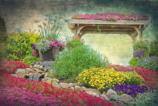 Flower Garden with Petunias