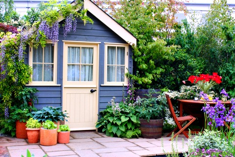 Blue Shed with Wisteria and Potted Plants and Flowers