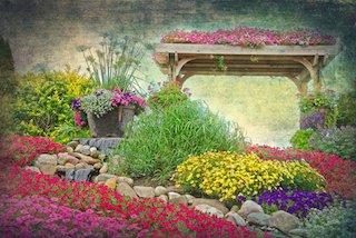 Flower Garden with Petunias
