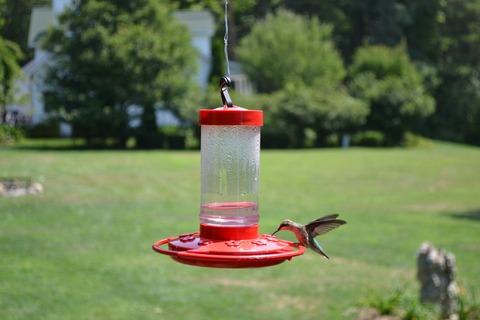 hummer feeding